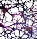 Science Links Anxiety to High IQ & Sentinel Intelligence