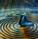 The Ripple Effect, How Our Actions Affect Others