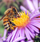 Experiment Shows Bees Understand Mathematics