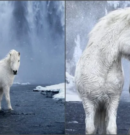 Photographer Captures Fairytale-Like Horses Roaming Iceland's Epic Landscape